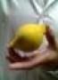 Limón De Esponja