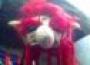 Gorrito De Duende/Troll Rojo