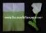 Papel Flash Bicolor Verde/Blanco