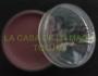 Cubre Dientes/ Sangrante(Rojo) 8 grs.