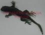 Iguana Chica De Hule-Verde