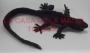 Iguana Grande De Hule-Negro