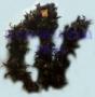 Boa De Plumas-Negro 35 grs.